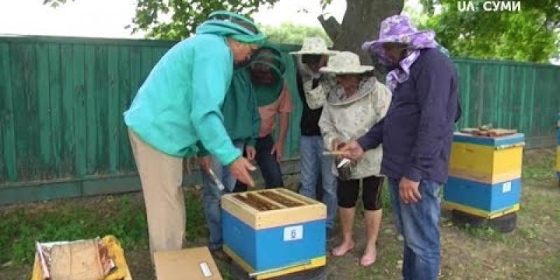 Вбудована мініатюра для На Сумщині за державний кошт можна отримати професію бджоляра